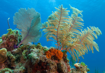 Healthy coral reefs